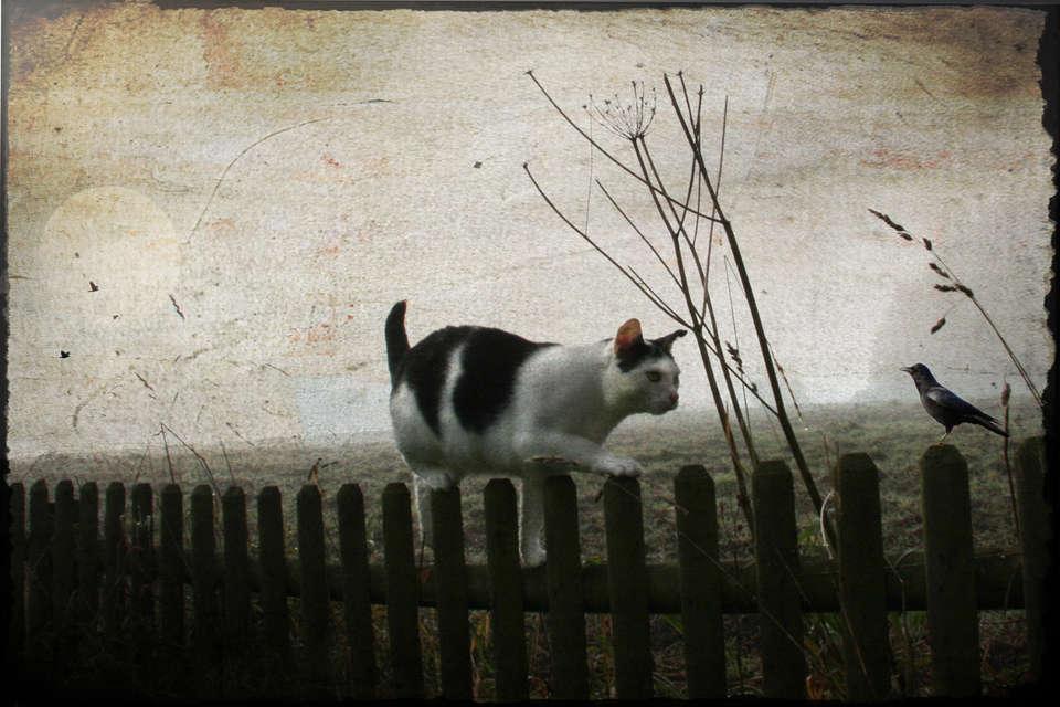 il-gatto-nei-sogni
