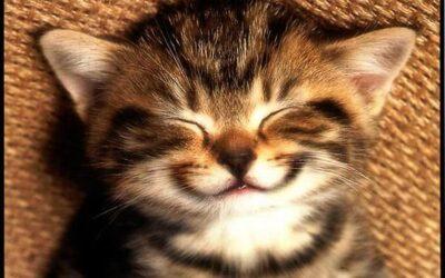 Come diventare felici